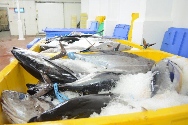 Fisheries Warehouse